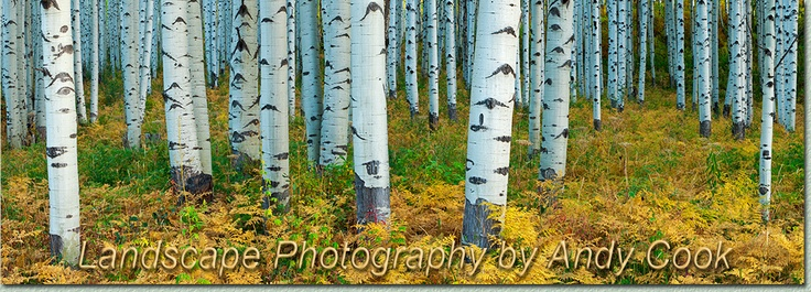 Images of Rocky Mtn. National Park - Colorado