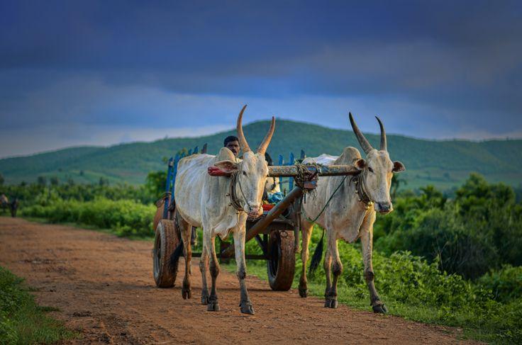 Indian Village Life by Gajendra Kumar on 500px