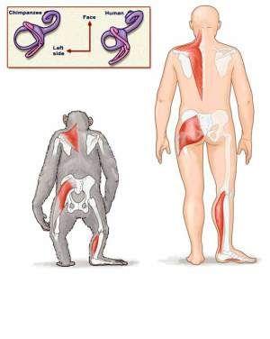 Comparison of Chimpanz...