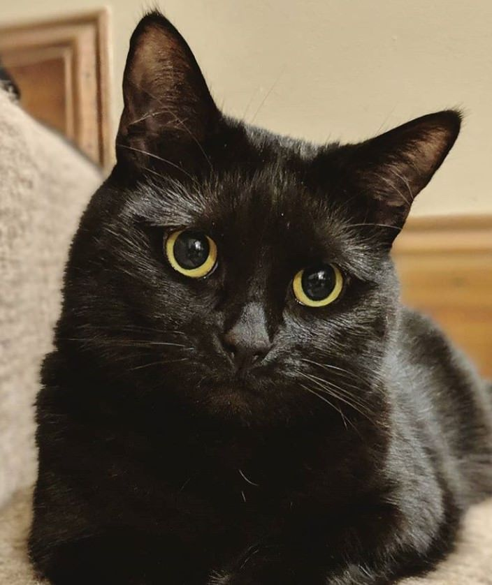 130 Gothic Cat Names | Best Cat Names | Cat names, Cats