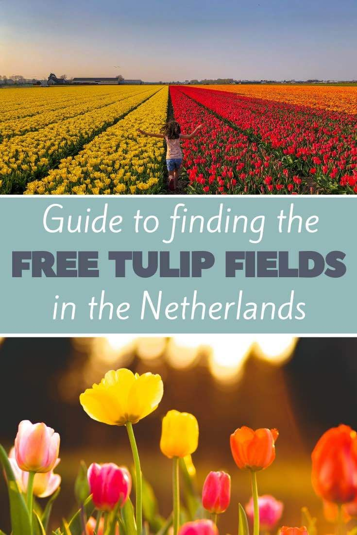 Where To See Tulip Fields In The Netherlands For Free In 2020
