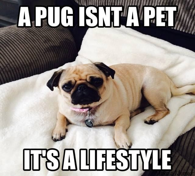 Absolutely!!!!! I love well more like am OBSESSED with my little stinkin fats bad doggie Harley girl