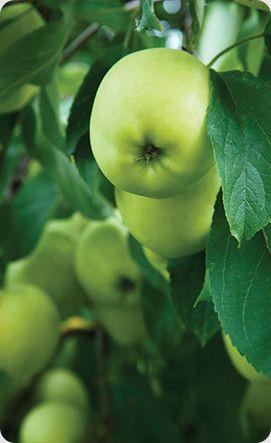 Farming Certification | Australian Certified Organic
