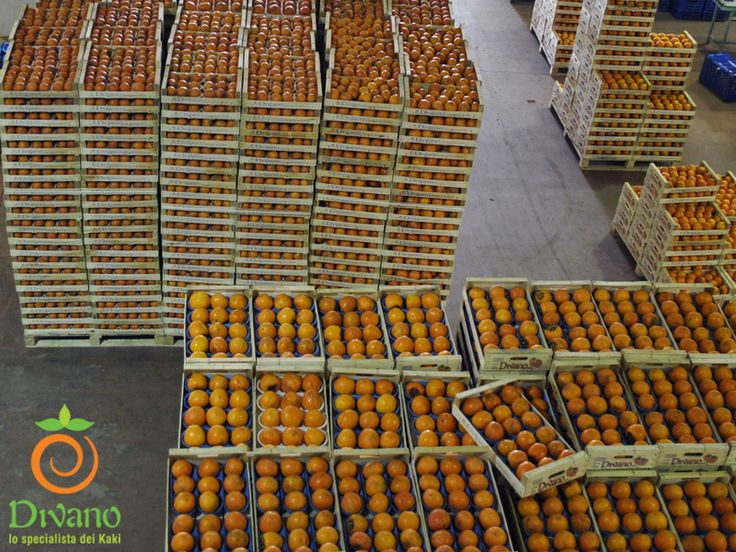 Persimmons waiting for working process. Info: www.divanosrl.it/en.  Kaki in casse, pronti per la lavorazione. Info: www.divanoosrl.it +39 0823 604052