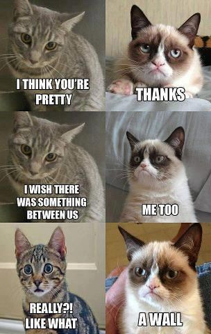 Grumpy cat, thanks for the advice on what to say next time an ex tries talking to me!