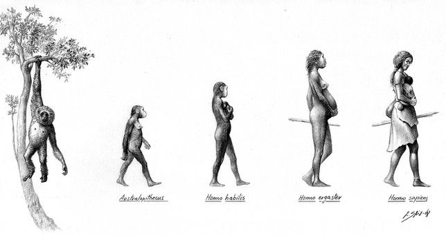 La UBU hará visible el papel de la mujer en la evolución humana - Diario de Burgos