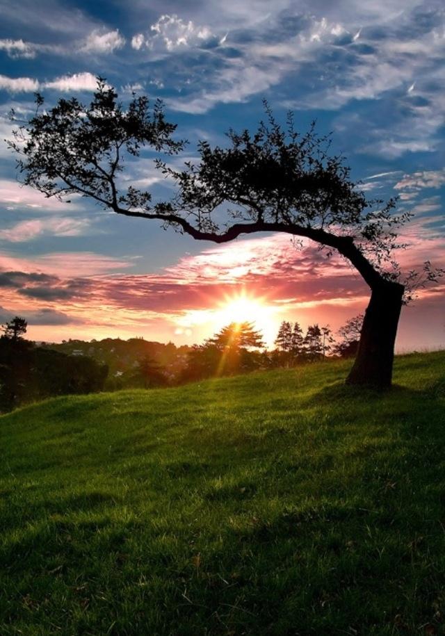 """""""Si quieres ver un árbol, ve al valle, si quieres ver un valle, ve a la montaña, si quieres ver una montaña, sube a las nubes, pero si lo quieres ver todo, cierra los ojos y solo piensa."""""""