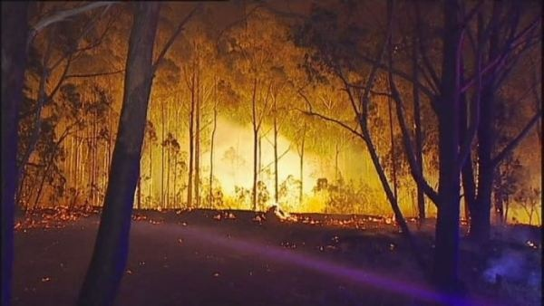 Residents of bush fire ravaged properties return home ... click image to view at Bear Tales