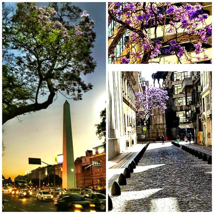 EL PARAISO O EL INFIERNO: LOS JACARANDAES DE BUENOS AIRES Al este y ala oeste llueve y lloverá, una flor y otra flor celeste del jacarandá...