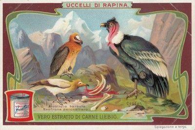 Avvoltoi, 1906