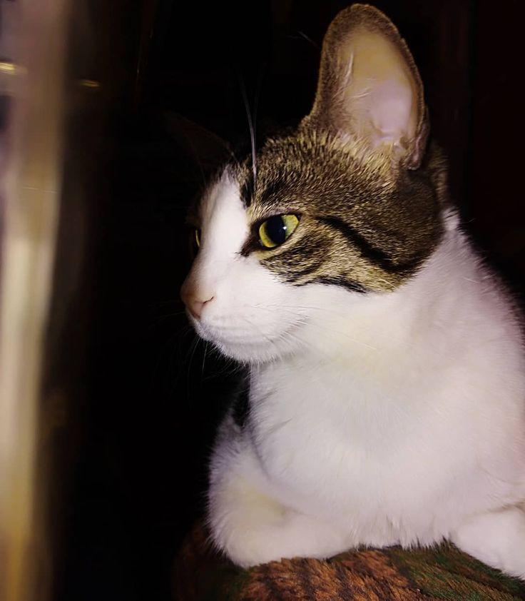 Hello #cat #catphoto #cutecat #coolcats #lovecats #animals