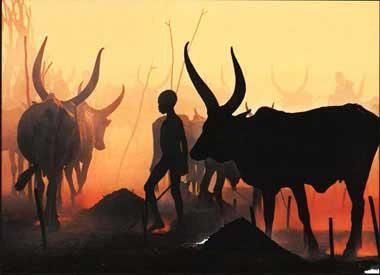African Ankole Watusi Cattle
