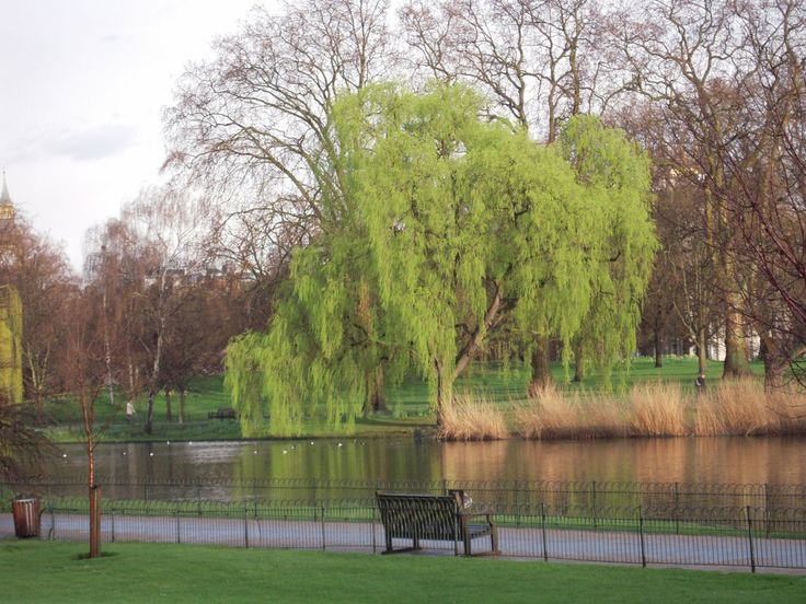 Parque Saint James, en Londres