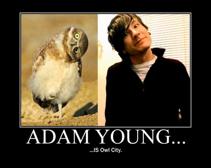 Adam Young ♥ ♥ ♥ ♥ ♥ ♥ ♥ ♥ ♥ But that is a retard owl and he is no retard