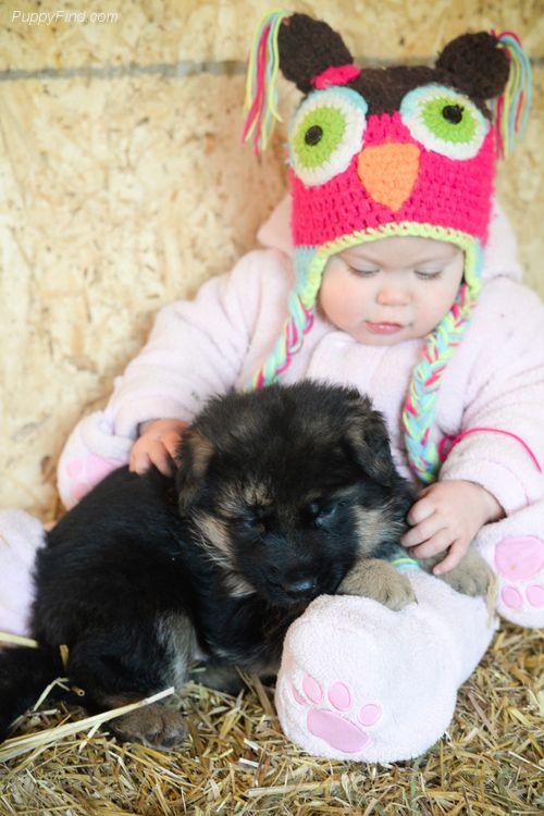 Litter Of 6 German Shepherd Dog Puppies For Sale In Free Soil Mi