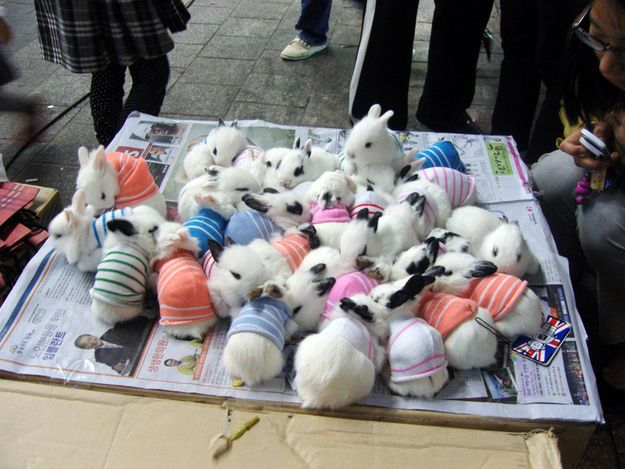 "A pile of bunnies in sweaters. The technical term for a group of bunnies in sweaters is ""A Furble."" Give yourself a point if you knew this.  Source: cutestpaw.com: Rabbit, Animals, Bunnies Wearing, Bunny, Pet, Baby Bunnies, Adorable, Things"