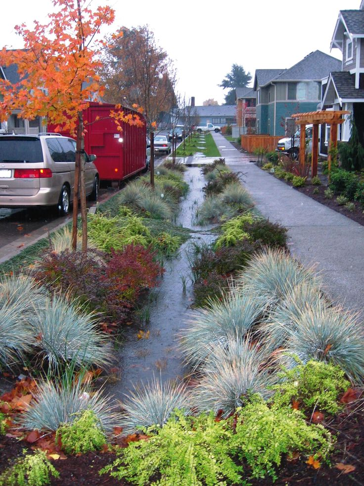 That's quite the rain garden!