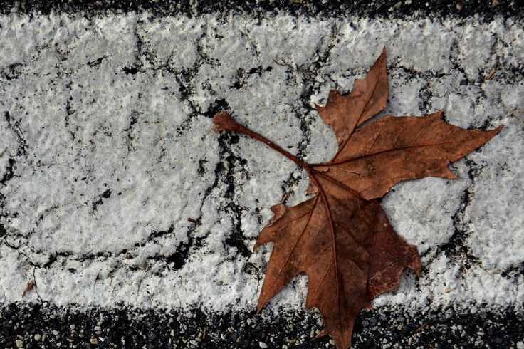 FALL ... POINT OF VIEW by Lucilla Cuman on 500px https://www.facebook.com/LucillaCumanPhotography