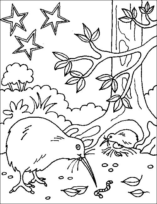 Aotearoa nz map colouring page - Google Search