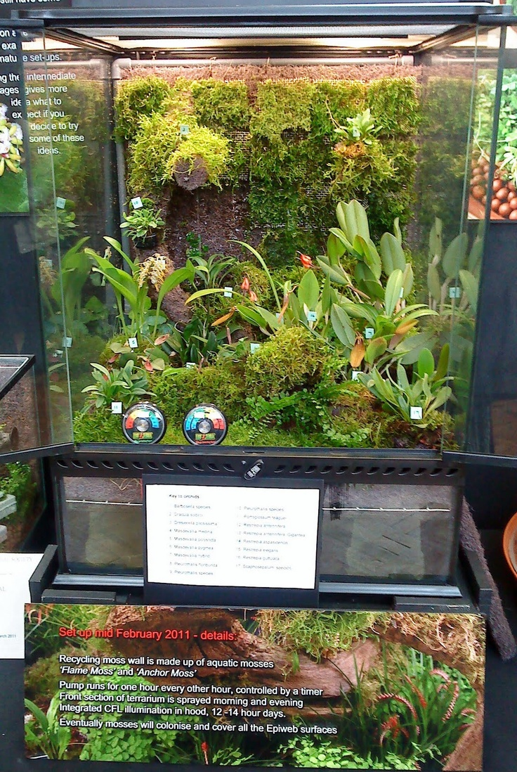terrarium the gardengoer a day at the london orchid show wow: day orchid decor