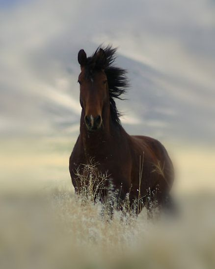This one reminds me of the sweetest spirited horse we had as children...Her name was Lady and she was just that!