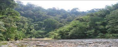 Bukit Lawang Tropical Rain Forest Dense Of Jungle (Green Party Trekking & Rafting Club)