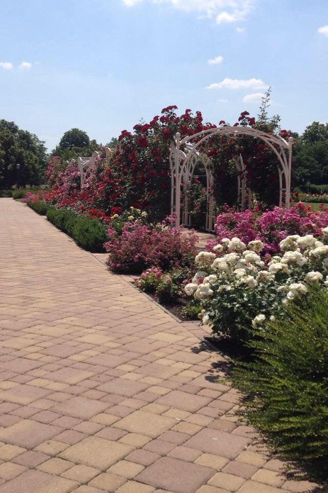 Rose garden in Szolnok