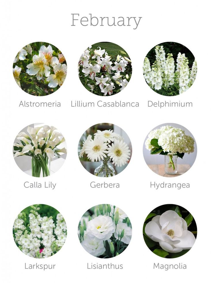 252 best bouquet design images on pinterest bouquets wedding wedding budget tip 16 choose in season flowers mightylinksfo Choice Image