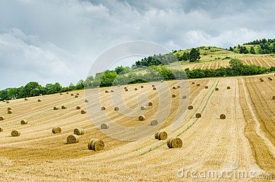 Hilly Landscape - Download From Over 25 Million High Quality Stock Photos, Images, Vectors. Sign up for FREE today. Image: 43962265