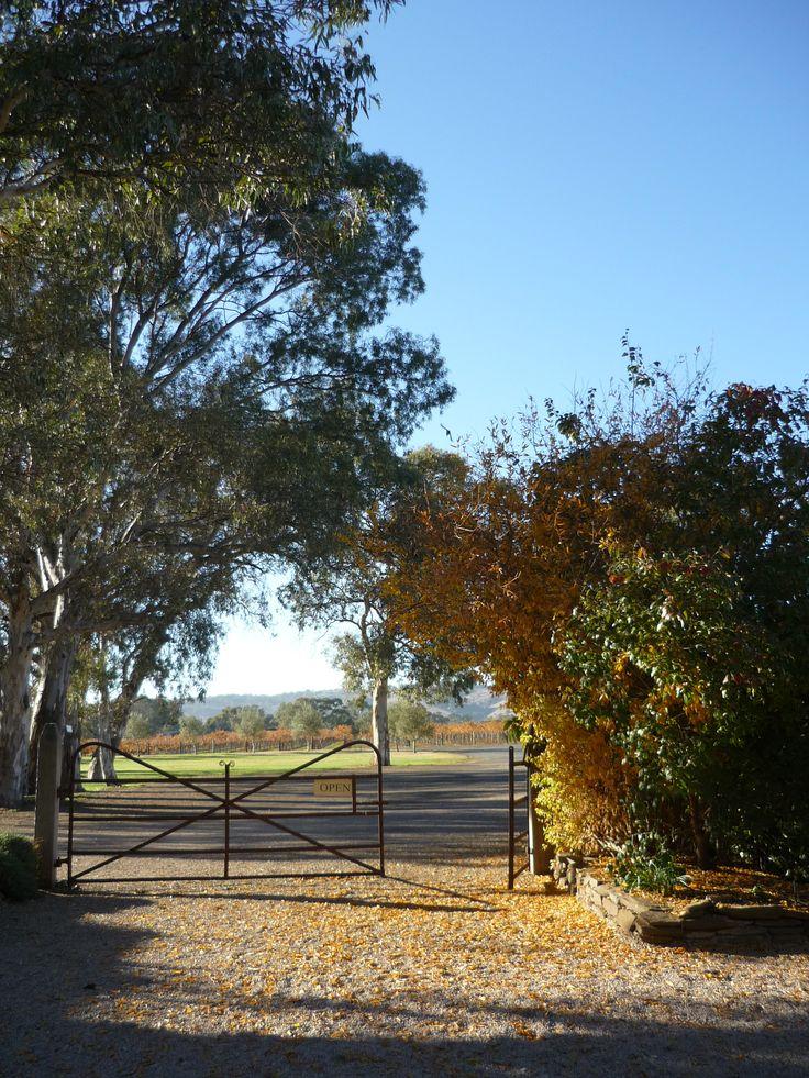 Good morning Autumn!  Turkey Flat Vineyards Barossa Cellar Door