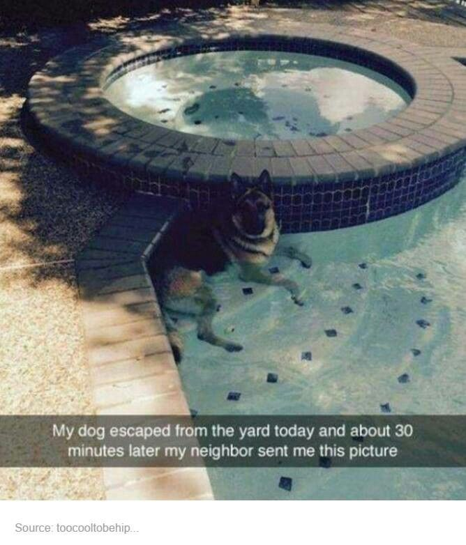 """My dog escaped from the yard today and about 30 minutes later my neighbor sent me this picture"""