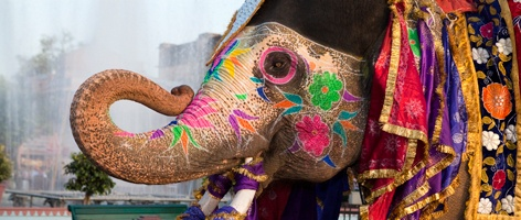 Rundreise i India. Bombay, Bollywood, Kerala m.m.