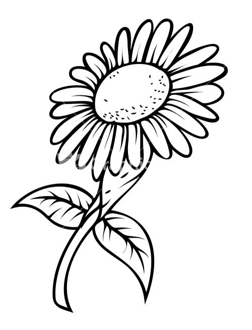 Line Drawing In C : Line drawing sunflower imgkid the image kid