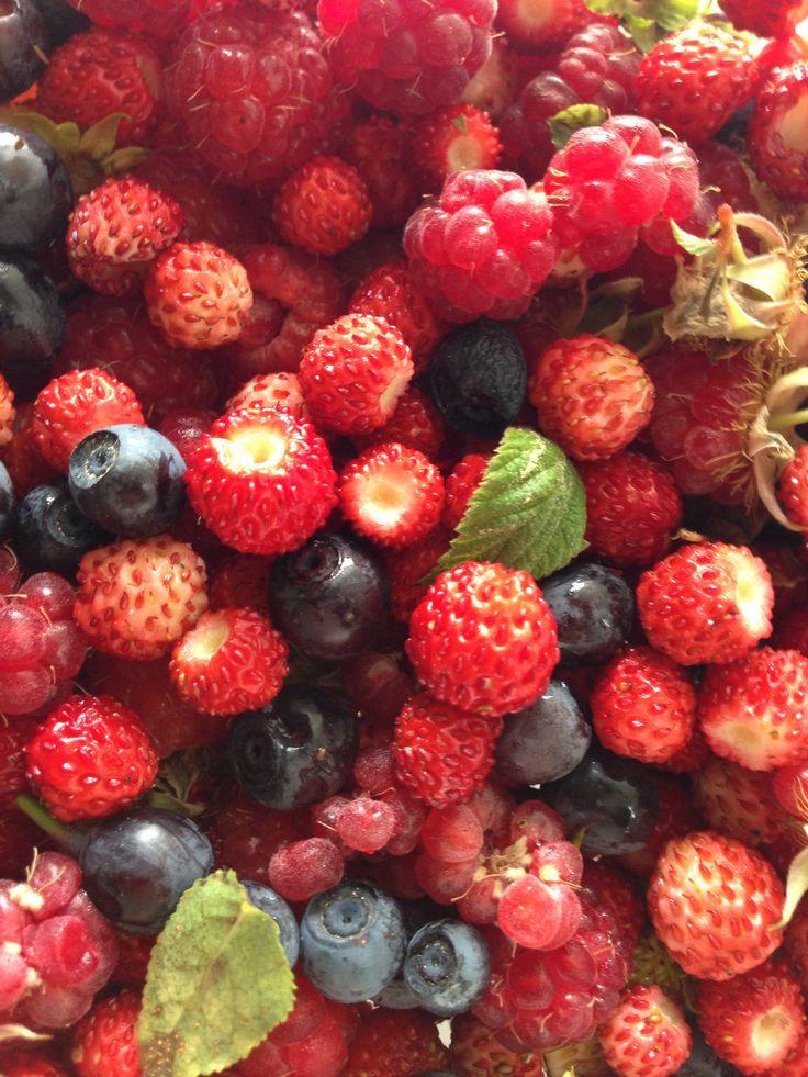 Fruits del bosc