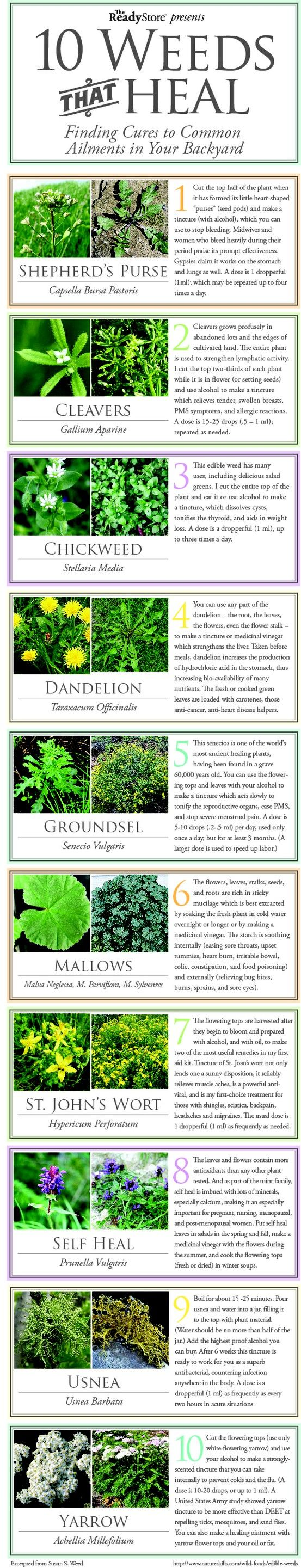 10 Weeds that Heal: Finding Cures to Common Ailments in Your Backyard.