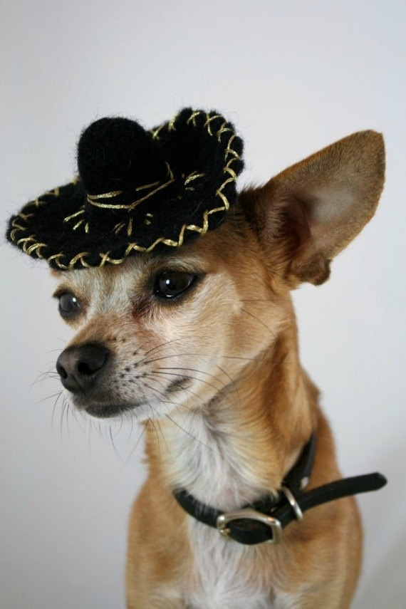 How To Make A Cowboy Hat For Dogs