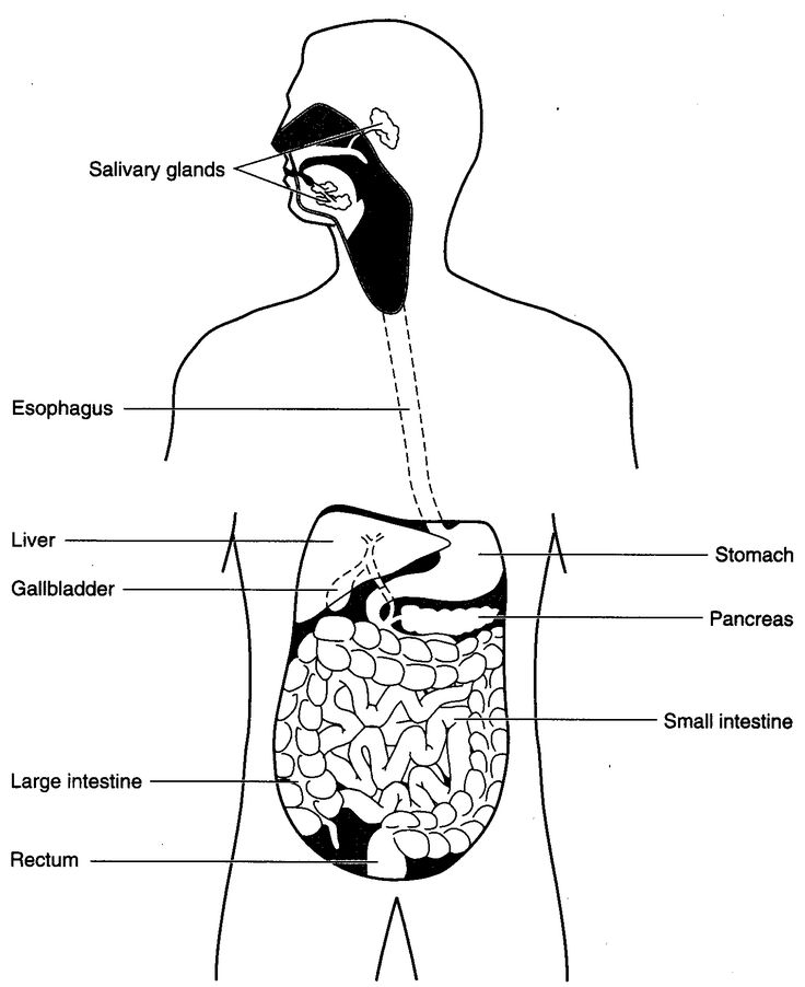 human body science - digestive system worksheet ...