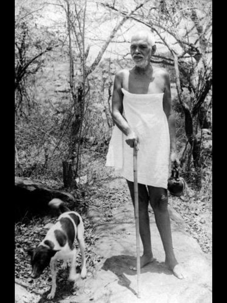 Image result for ramana maharshi with dogs