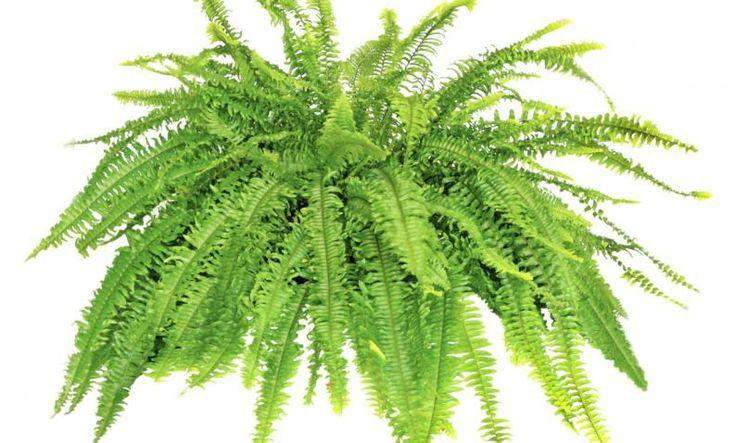 M s de 1000 ideas sobre plantas que purifican el aire en for Plantas para el hogar feng shui