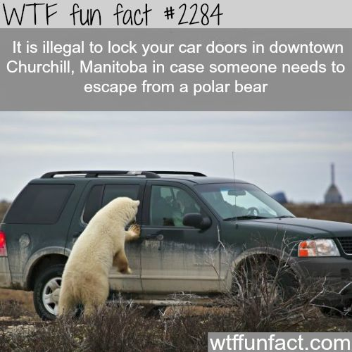canadas awesome laws wtf fun facts