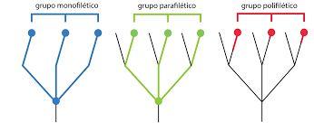 Resultado de imagen para filogenia de la chlorophyta