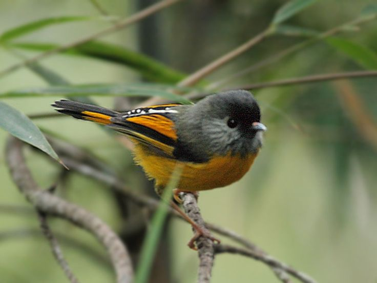 Mahuadand Wildlife Sanctuary - in jharkhand, India