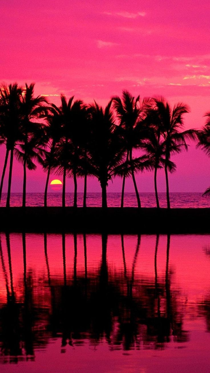 Tumblr palm trees girly pink iphone plus wallpaper tumblr for Girly wallpapers for bedrooms