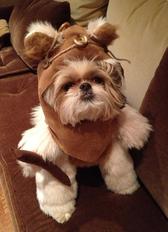 ewok dog costume shih tzu 25 best ideas about ewok dog costume on pinterest names 9795