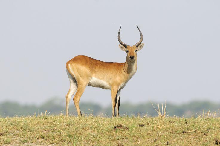 Chobe National Park, Kasane, Botswana