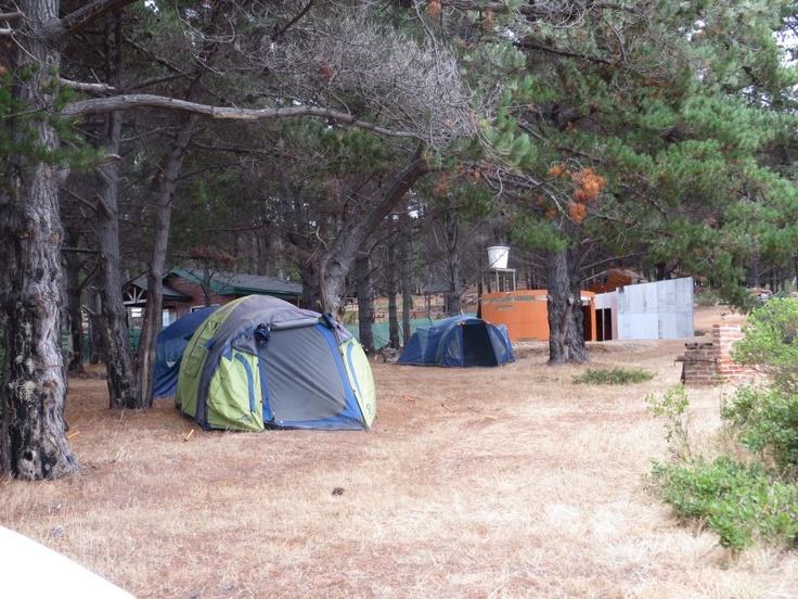 Camping, arte y naturaleza del Centro de Arte Curaumilla.
