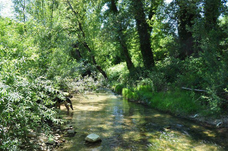 Unser Fluss vom Ferienhaus Casa Valrea nur 50 Meter vom Haus entfernt. www.casavalrea.de Wir sind ins Paradis gezogen und lassen auch Feriengäste darin wohnen. Falls ihr Lust habt auf Landleben in schönen Ferienwohnungen in Italien, dann kommt uns besuchen.