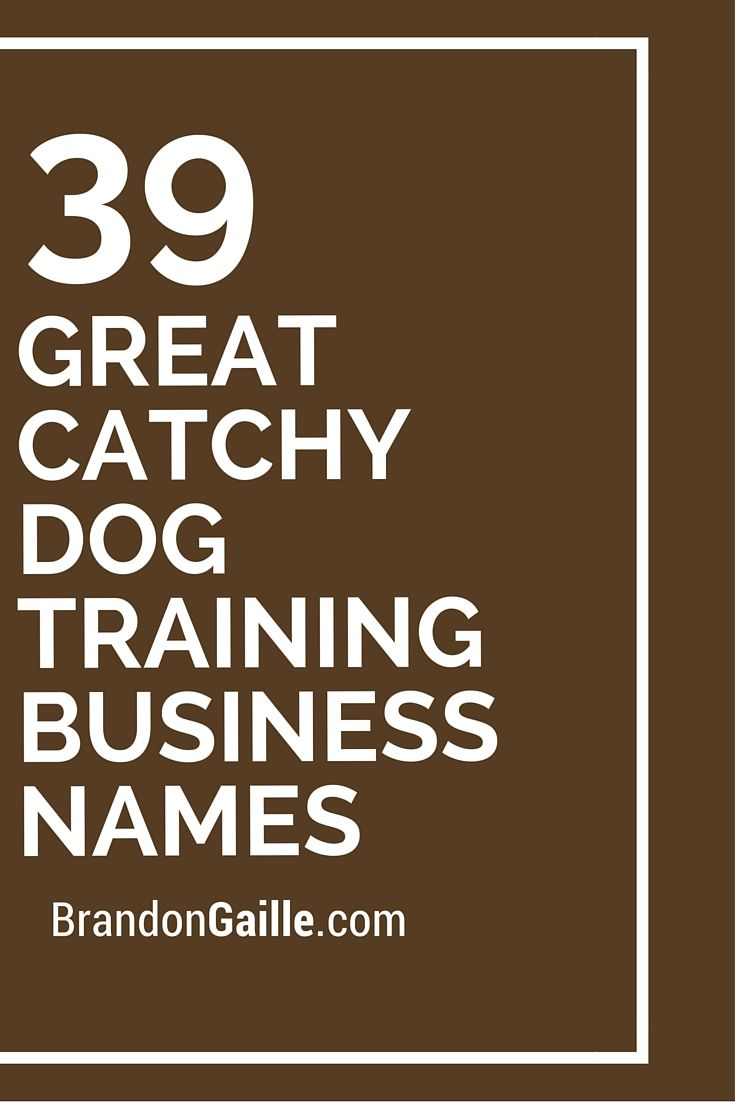 350 great catchy dog training business names