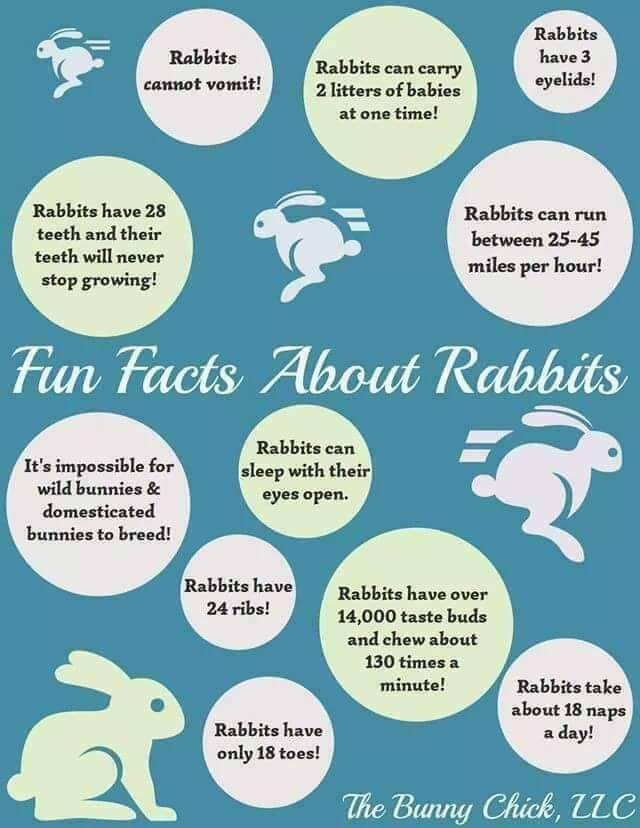Share Your Fun Bunny Facts On Our Bunny Blog Bunnies Rabbits