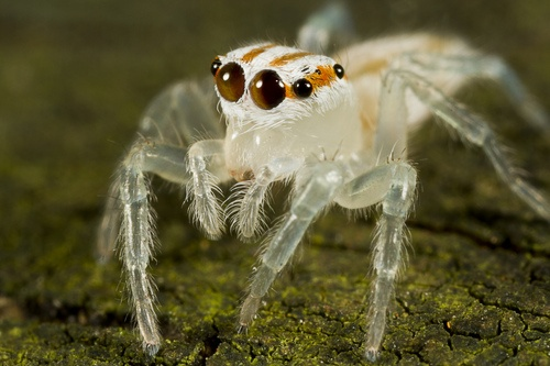 the only thing scarier than a spider is an invisible spider